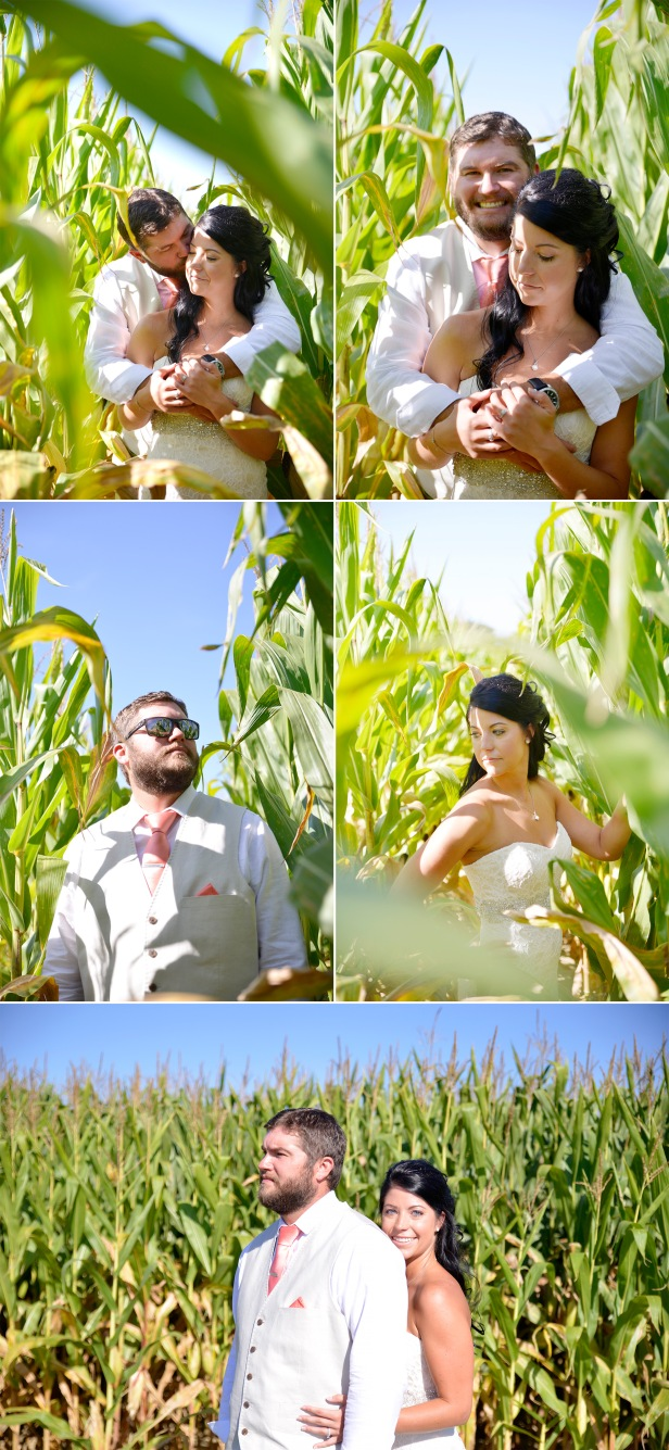 3-1-bride and groom wedding photos in corn field
